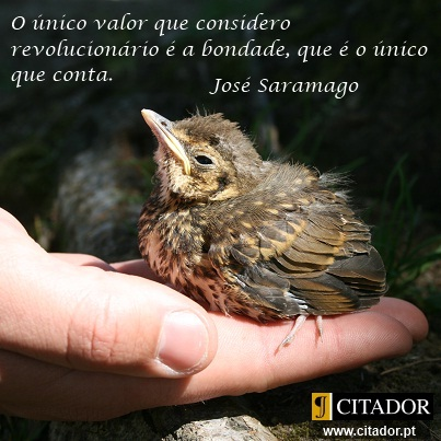 O Valor da Bondade - José Saramago : O único valor que considero revolucionário é a bondade, que é o único que conta.